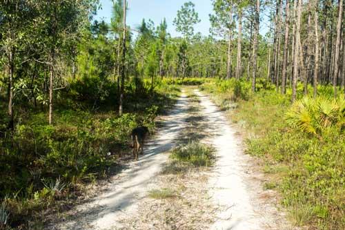Apalachicola-Forest---Florida.jpg