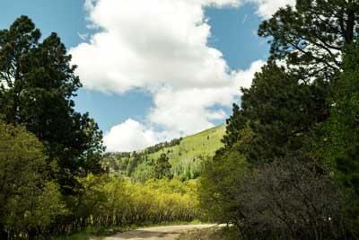 Aspen-Stand-Manti-Sol-Ntl-Forest.jpg