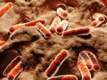 Bacteria-bacilli.jpg