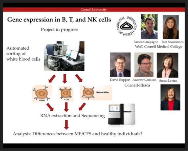 gene expr BTNK.jpg