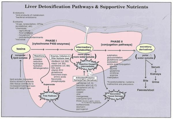 LIver Detox Pathways Graphic.png