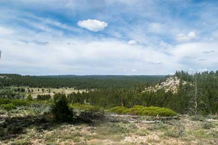 Lots-of-Forest-Utah.jpg