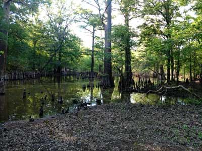 Louisiana-Swamp-area--Shreveport.jpg