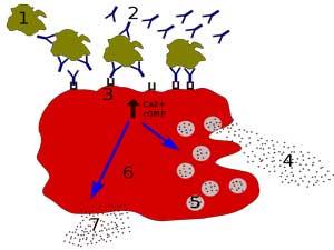Mast-cells-cfs-fibromyalgia.jpg