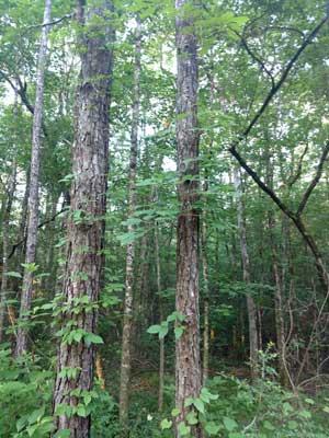 Ocala-National-Forest-II.jpg