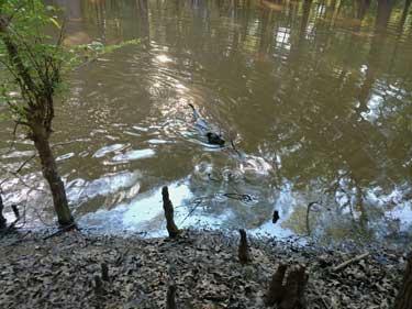 River-Swimming-Louisiana.jpg