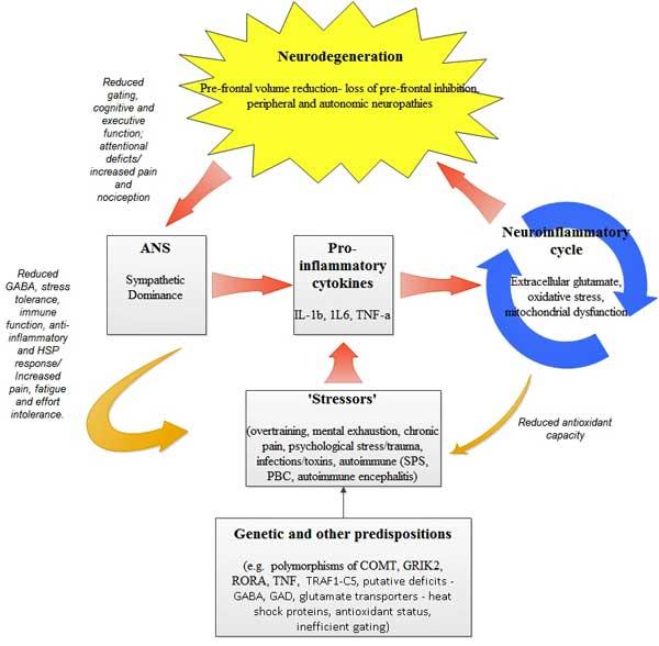 neuro-inflammatory model