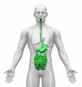 Gastrointestinal-System