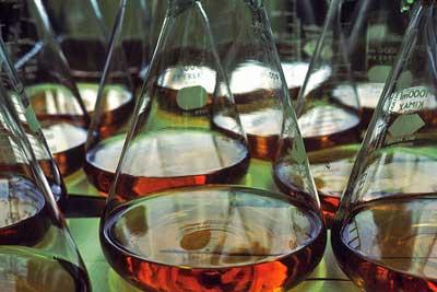 interferon in lab