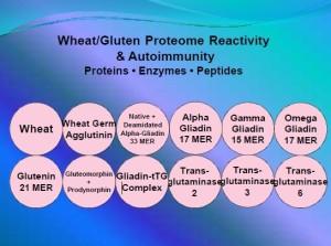 gluten peptides