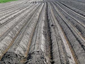 soil-Netherlands
