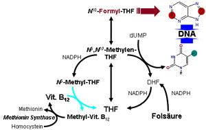 folic-acid-B-12