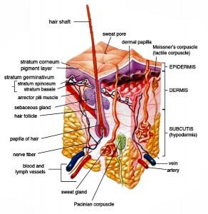 skin - fibromyalgia