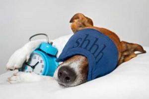 Dog-Sleeping-With-Alarm-Clock--40123960