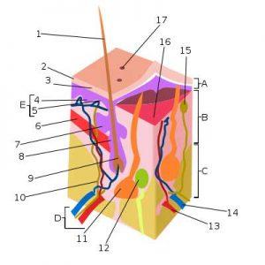 small nerve fibers