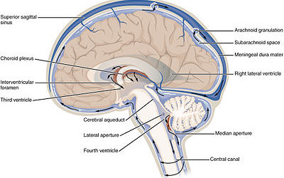 cerebral spinal fluid