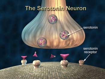 Serotonin_neurons