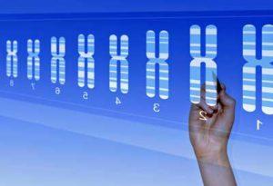 Genetic database Univ Utah