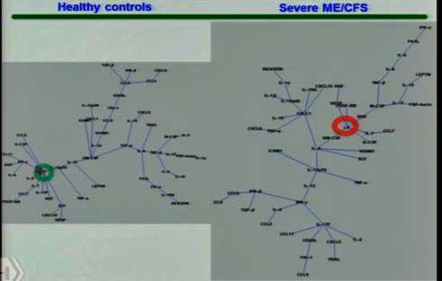 cytokine network hubs Montoya