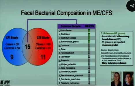 gut bacteria ME/CFS