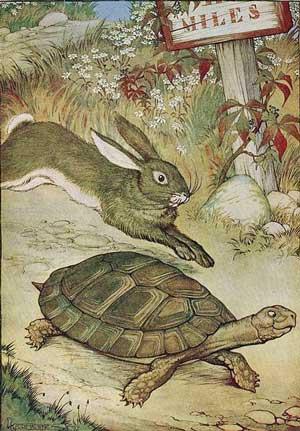 nanoneedle hare tortoise