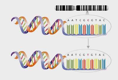 Gene polymorphism