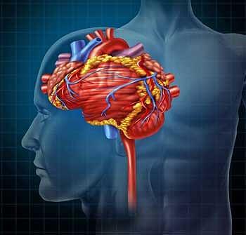 "Ivabradine – Could a ""Wonder Drug"" For POTS Work in ME/CFS?"